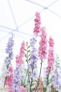 British flowers wedding cheltenham pink pastel